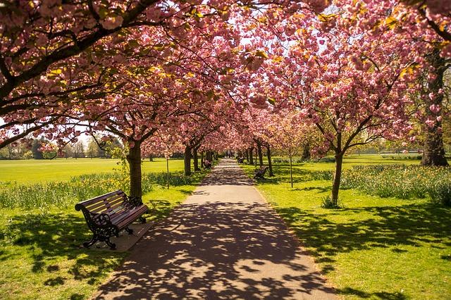 פארק בלונדון