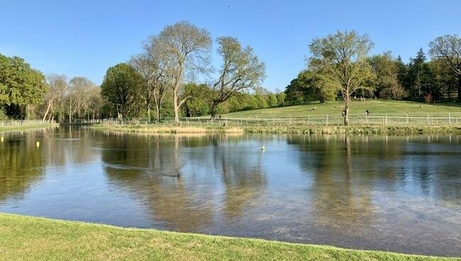 בקיץ-משמש-כאגם-שחייה.-האגם-בפארק-בקנהאם-פלייס