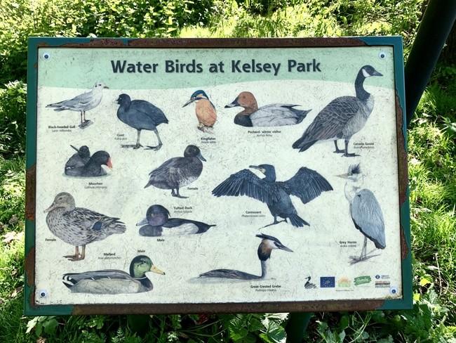 13 סוגים של עופות מים ועוד הרבה בעלי חיים ועצים עתיקים. קלסי פארק בדרום לונדון
