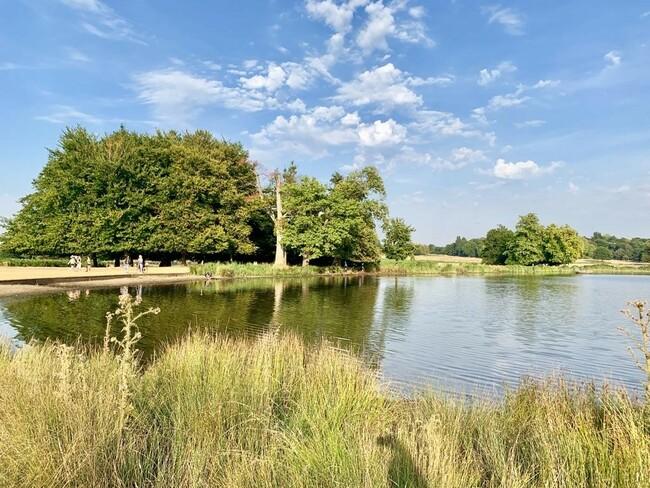 הפארק המלכותי הגדול בלונדון + שמורת טבע עם 630 איילים שמסתובבים חופשי. ריצ׳מונד פארק
