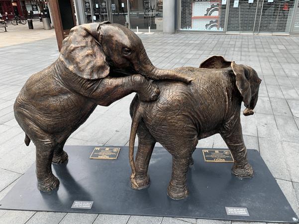 כל פיל מייצג פיל יתום שארגון SWT הציל