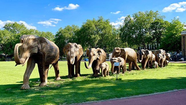 עדר הפילים - מבט מרחוק