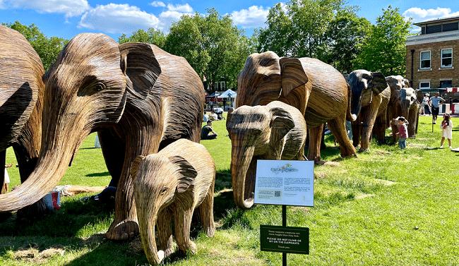עדר פילים על הדשא